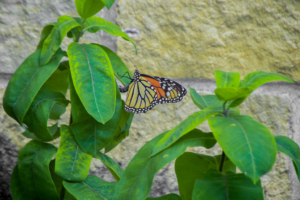 Butterflies symbolize the rebirth that can happen in shelter